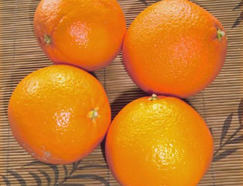 Zitrusfrüchte – Vitamine im Winter – Herkunft, Aussehen, Inhaltstoffe